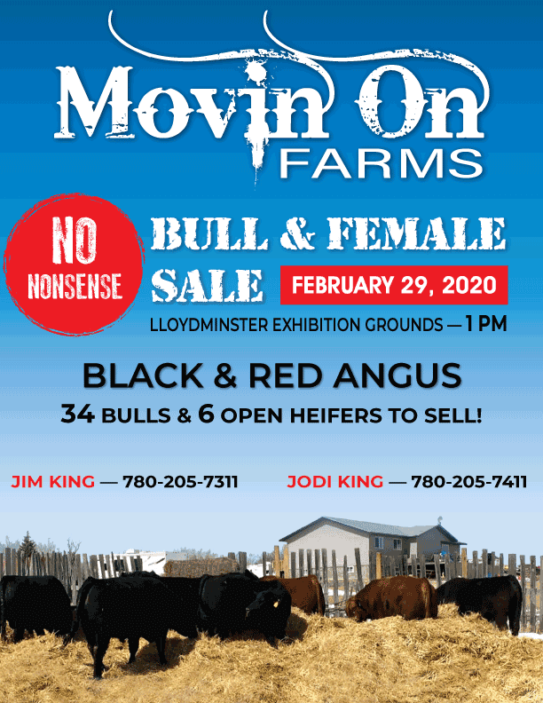 Complete sale catalog designed and printed for Movin On Farms annual Bull and Female Sale 2020